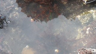 Tide pool | by frugalmom