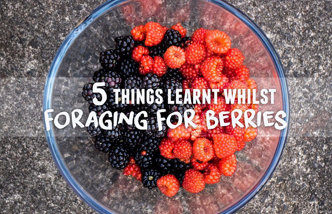 5 Things Learnt Whilst Foraging For Berries | lifeofkitty.co.uk