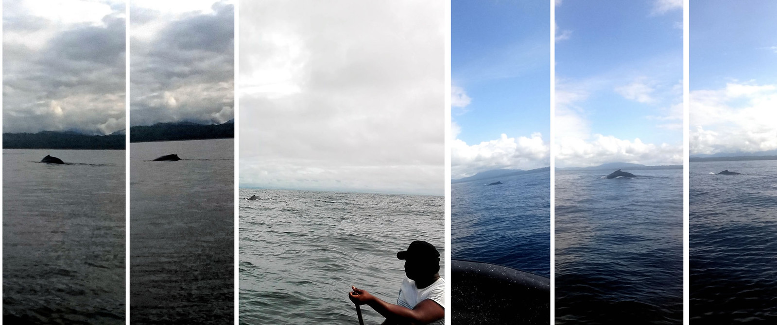 anim ballenas
