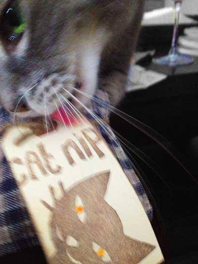 Cat Nip Cat Nip Everywhere Toy Stroy