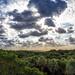 Gumbo Limbo Atlantic View