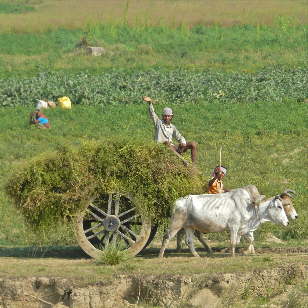 rural and urban life in india essay The rural-urban continuum the usda updated their rural / non-rural area definitions based on the 2010 rural india contributes a large chunk to india's.