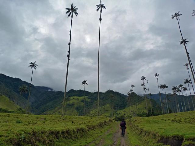 Sele en el Valle de Cocora (Colombia)