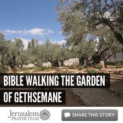 Bible Walking The Garden Of Gethsemane Mike Evans Flickr Photo Sharing
