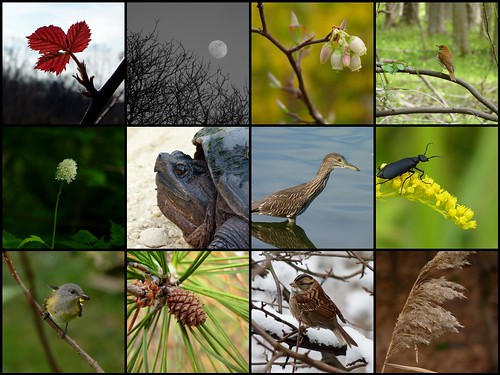 My best photos of 2012 | by Dendroica cerulea