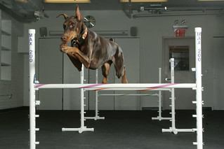 Dog Agility | by andreaarden