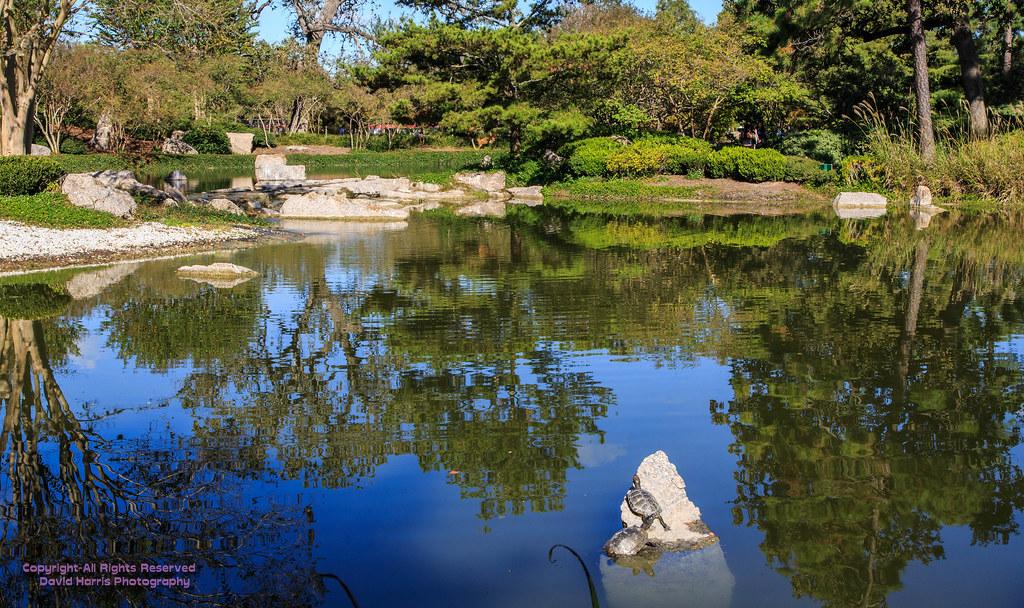 Hermann Park Japanese Garden Houston Texas 0290 Beardedwonder2009 Flickr