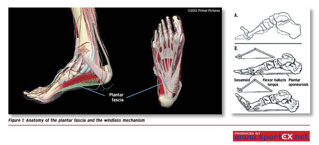 Anatomy Of The Plantar Fascia And The Windlass Mechanism Flickr