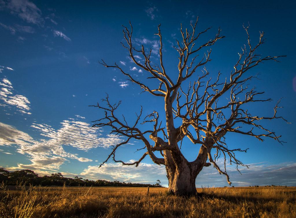 Gnarly Old Tree | Jacqui Barker | Flickr