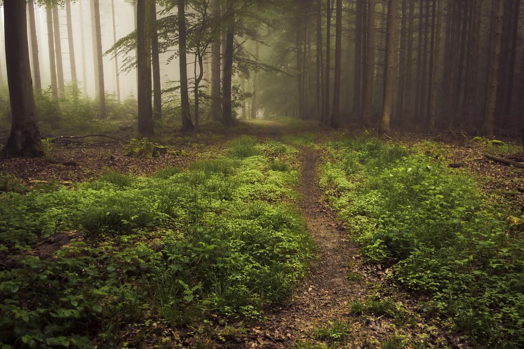 Forest Floor in Fog | A misty day in the Eifel | Jerdess ...