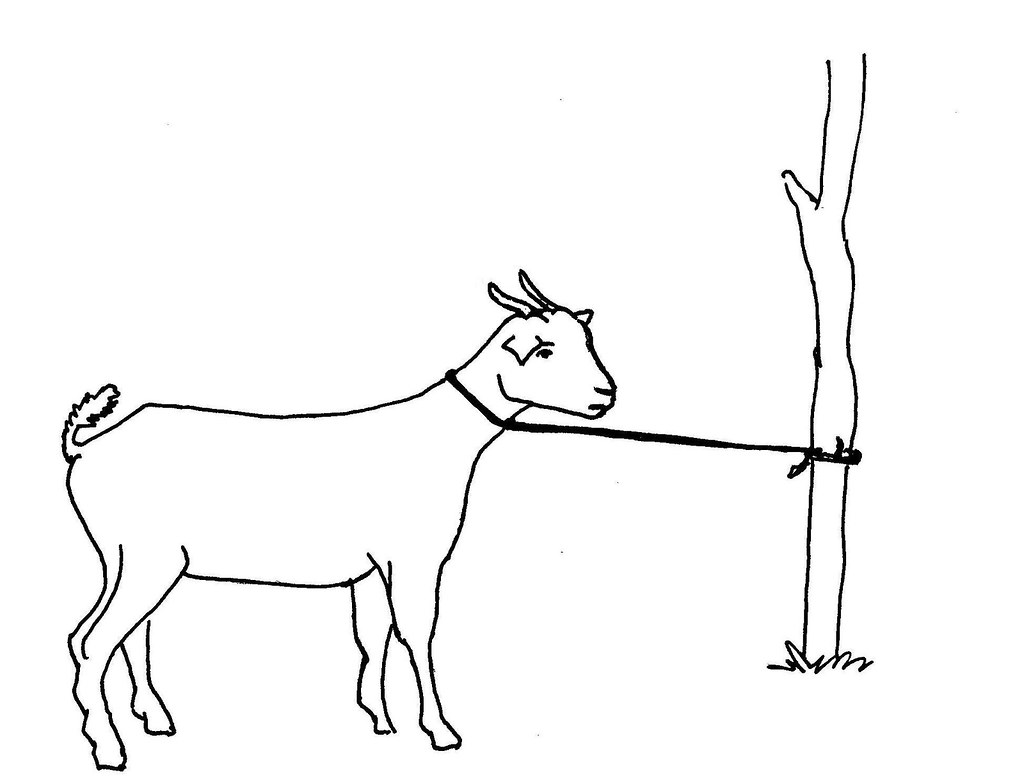 Line Art Information : Line drawing of a tethered goat used in information