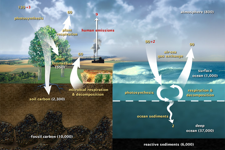 Fast Carbon Cycle