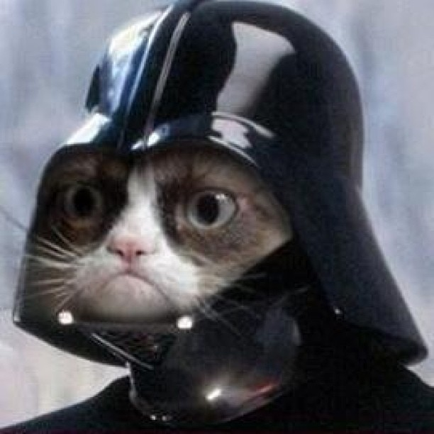 I. AM. YOUR. FATHER. #haha #darthvader #no #cat #kitty #toofunny ...