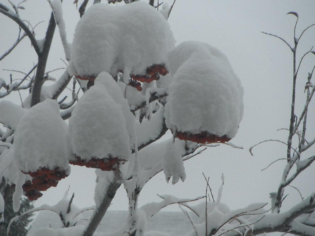 Berry White Christmas Flickr Friends | Safe Travels Flickr F… | Flickr