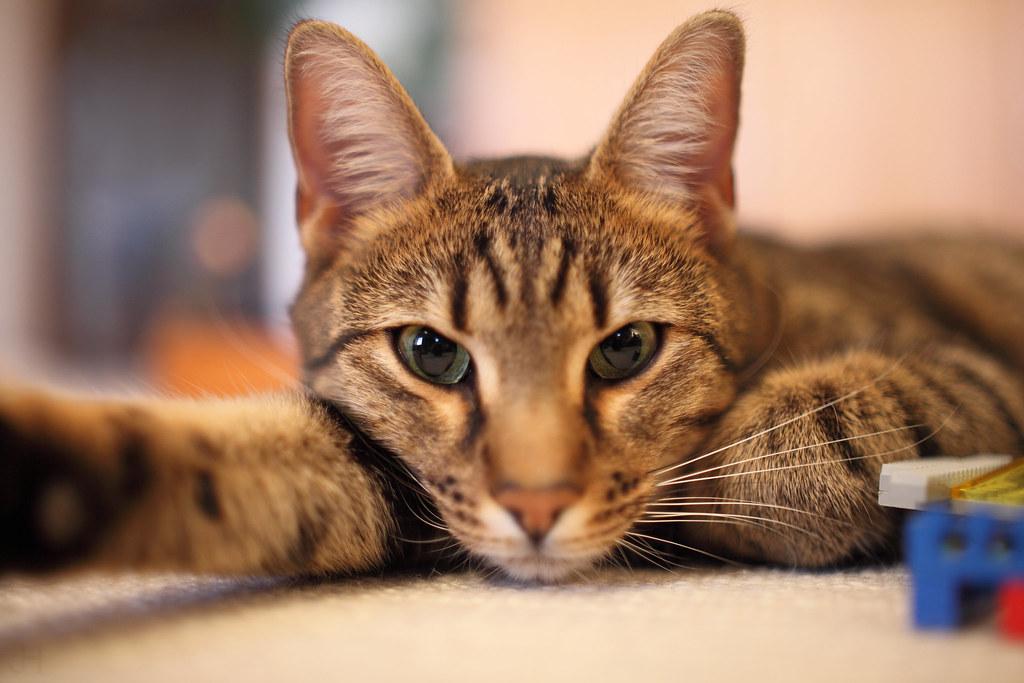 картинки на рабочий стол коты № 520276 без смс