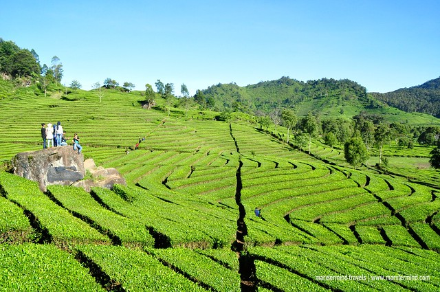 Tourists at Rancabali Tea Plantation Indonesia