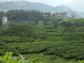 Munnar-Thekady | by dangerous_minds