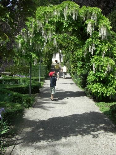 Wisteria, Iris Garten, Zurich | Cornus Garden Design | Flickr