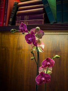 Olympus 17mm f/1.8 Test: The Orchid in the Library | by Entropic Remnants