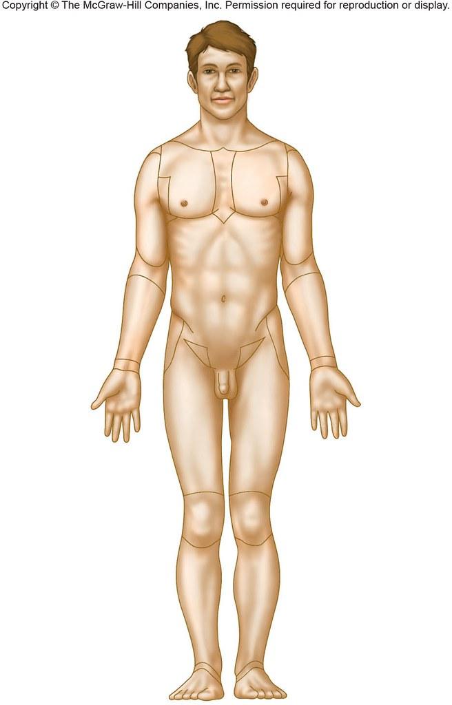 Anterior Body Regions Anatomy Physiology Flickr