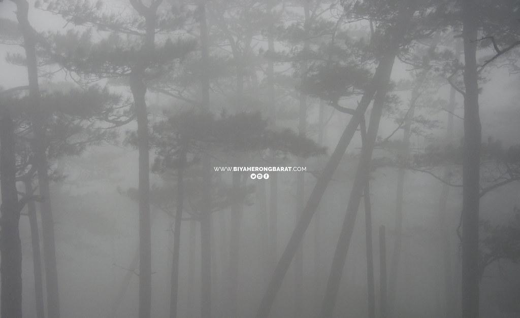 Mount Sicapoo Traverse solsona ilocos norte 9/9 pine forest