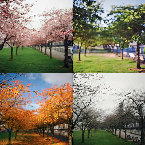 The Four Seasons Of The Sakura (a Year In The Making)