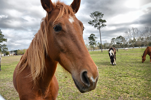 Horses | by Karsun Designs Photography
