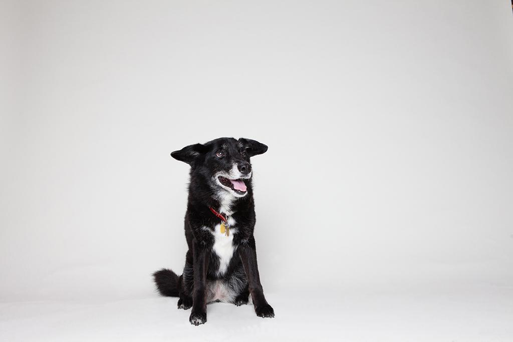 Mixed Breed Dog Shows Canada
