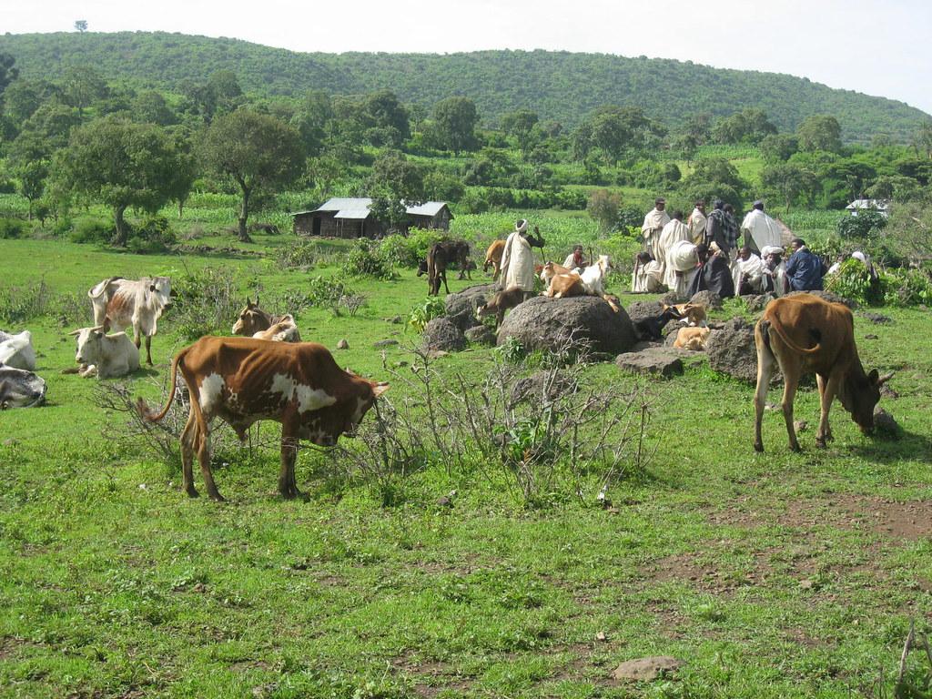 Community members from Gebugesa village using grazing land ...