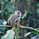 Amazonas 2012