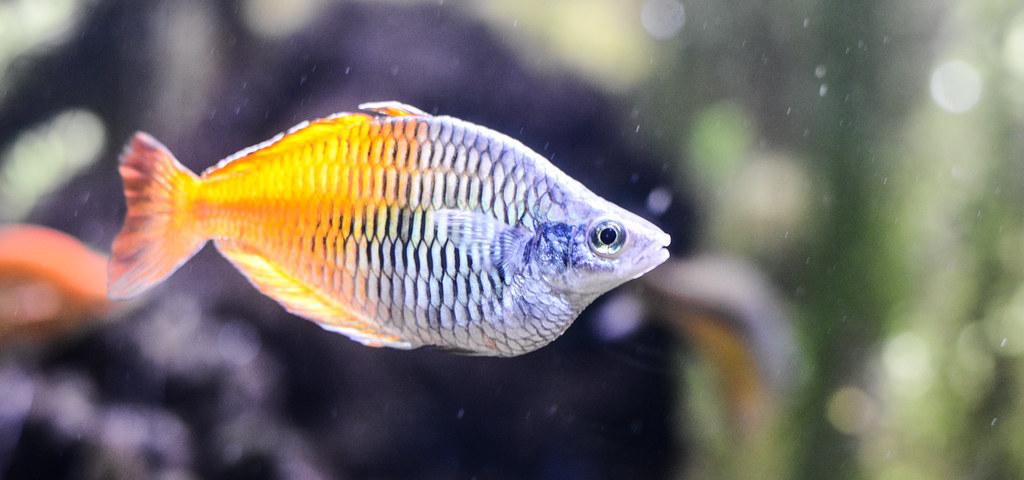 Image Result For Shedd Aquarium Free