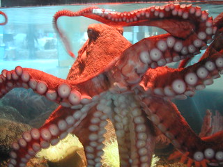 octopus | by Oregon State University
