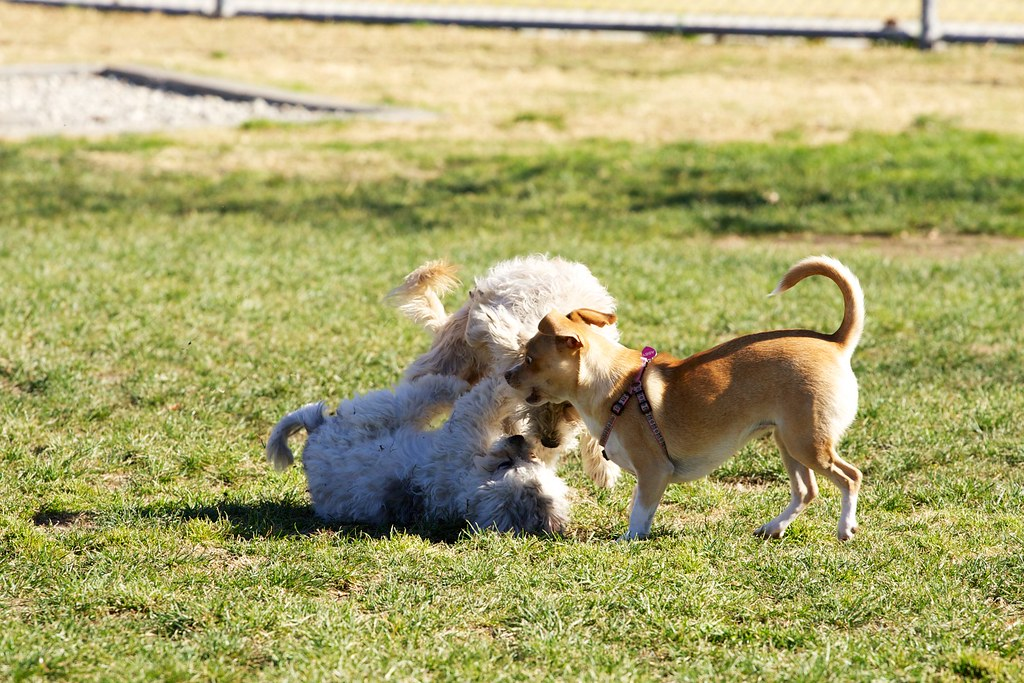 Off Leash Dog Park Edmonton Ab