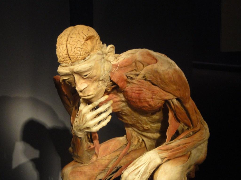 Human Bodies Exhibition Venetian Macau Marc Van Der Chijs Flickr