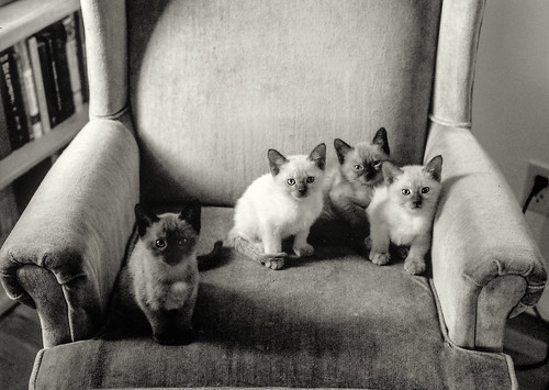 susu's kittens | by Robert Couse-Baker