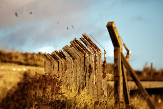 Fence posts | by sparkione