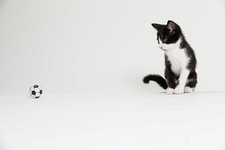 Black and White Kitten Playing Soccer | by Found Animals