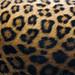 Leopard rosettes