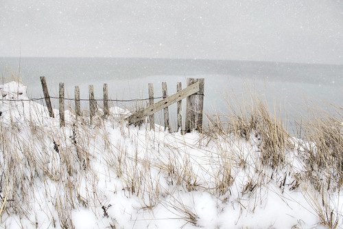 Cape Cod Beach In Snow Forest Beach At Chatham