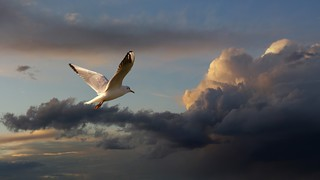 Seagull at sunset | by Dragan*
