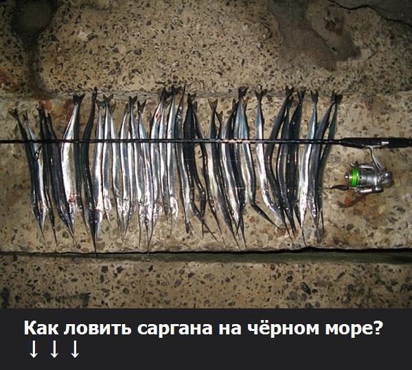 бомбарда на саргана в черном море