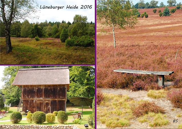 Lüneburger Heide - Kutschfahrt - Rundfahrt - Foto: Brigitte Stolle September 2016