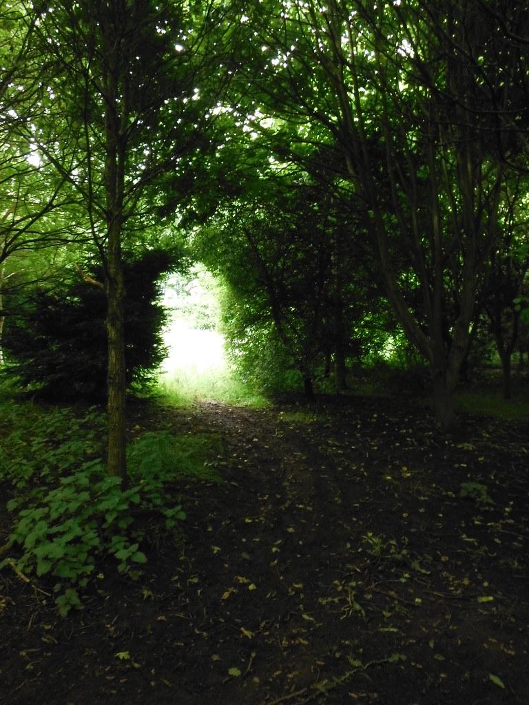Anne's Wood 1