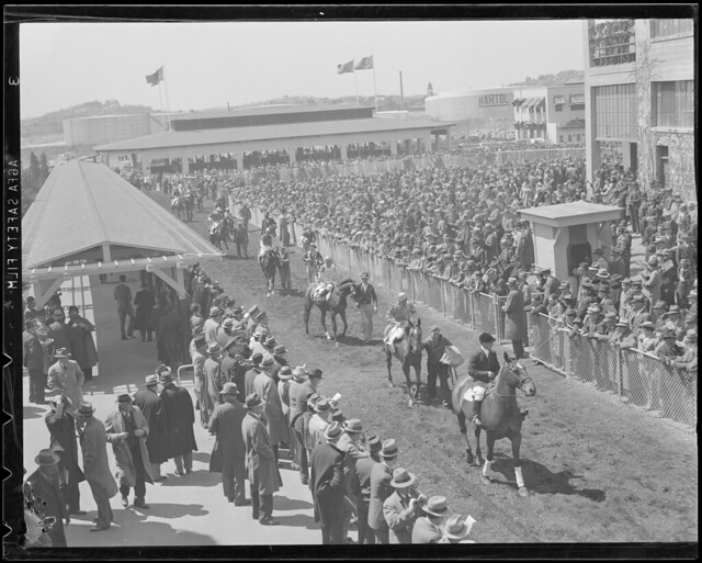 Crowd watches as horses are led to the track, Suffolk Downs