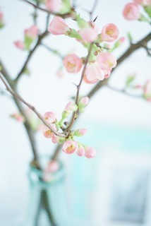 quince blossom | by wood & wool stool