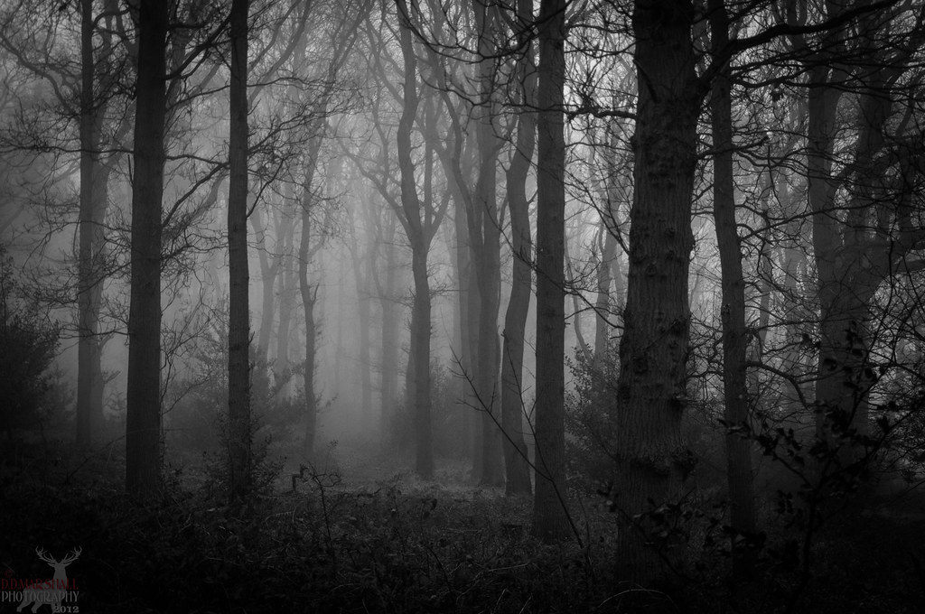 Kersey Valley Spookywoods, Archdale NC 336-431-1700 - Picture of ...