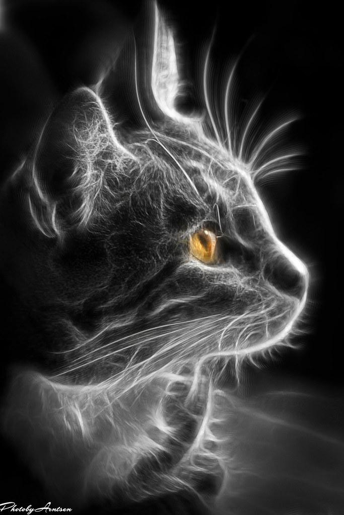 Black Cats Rn