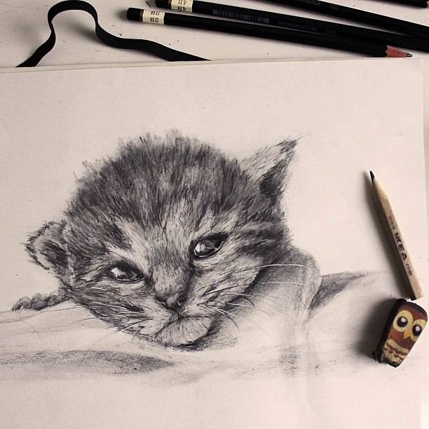 how to draw a tiger and a cat