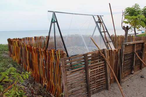 Fish drying in Atauro, Timor-Leste. Photo by Holly Holmes, 2013.