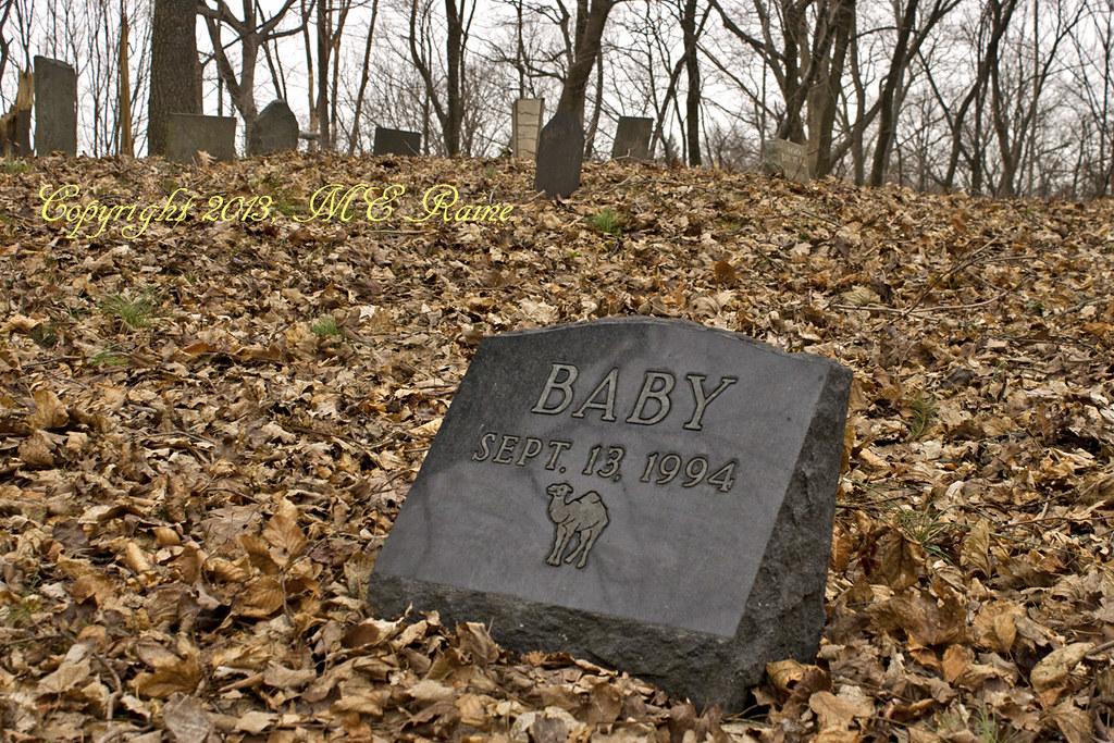 Doris Duke's Pet Cemetery Overlook Winter Scene at Duke Fa… | Flickr